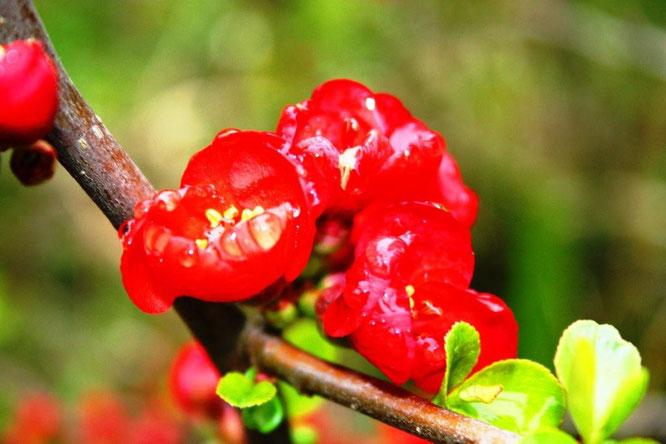 К сожалению, названия многих растений я не знаю :) (с) Дамир Байманов