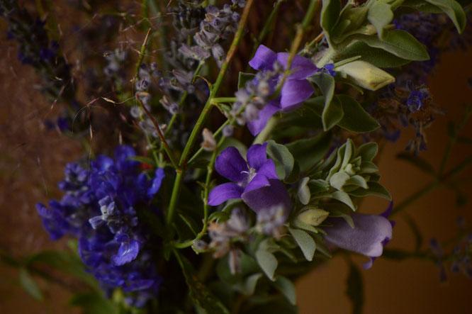 small sunny garden, desert garden, in a vase, monday, amy myers, monday vase, salvia farinacea, eremophila hygrophana