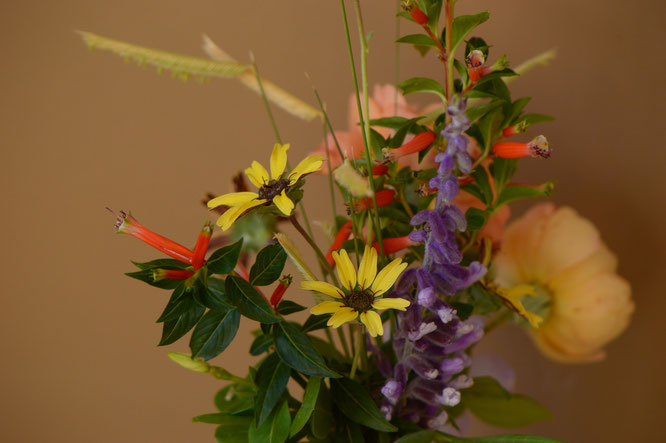 Berlandiera with Salvia and other flowers for In a Vase on Monday