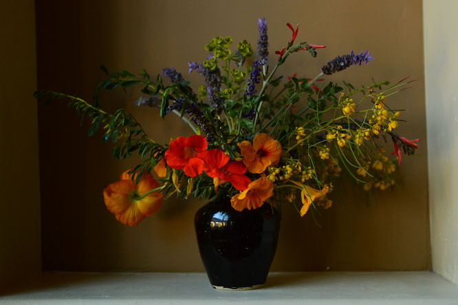 small sunny garden, desert garden, amy myers, photography, in a vase on monday, iavom, monday vase, nasturtiums, senna nemophila