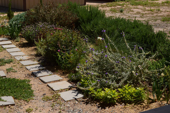 small sunny garden, desert garden, amy myers, photography, garden blog, tuesday view,