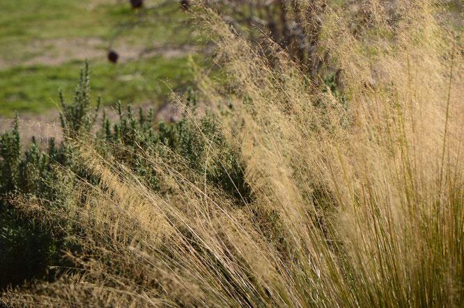 Tuesday view, small sunny garden, desert garden, january, amy myers, photography