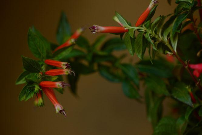 small sunny garden, desert garden, amy myers, in a vase on monday, monday vase, iavom, garden blog