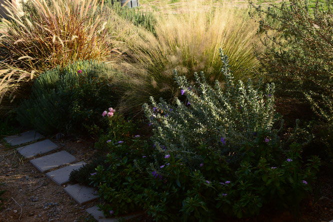 Tuesday view, small sunny garden, desert garden, january, amy myers, photography
