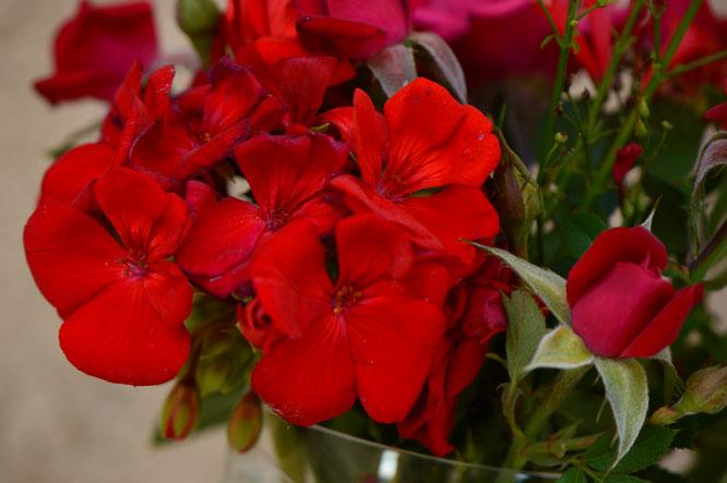 small sunny garden, desert garden, amy myers, photography, garden, blog, in a vase on monday, monday vase, iavom, pelargonium