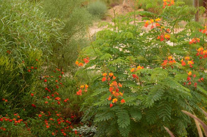 small sunny garden, desert garden, amy myers, photography, garden blog, summer