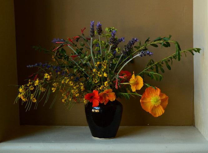 small sunny garden, desert garden, amy myers, photography, in a vase on monday, iavom, monday vase, nasturtium, papaver, nudicaule, iceland poppy, lavender, eremophila, outback sunrise, senna nemophila