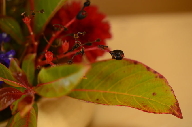 small sunny garden, desert garden, in a vase, monday, amy myers, photography, hamelia patens, firebush, berries