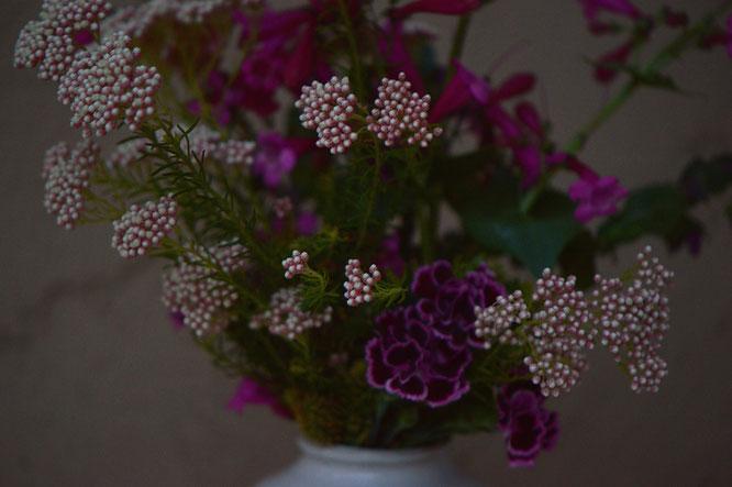 small sunny garden, desert garden, amy myers, photography, in a vase on monday, iavom, monday vase