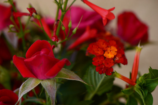 small sunny garden, desert garden, amy myers, photography, garden, blog, in a vase on monday, monday vase, iavom, lantana