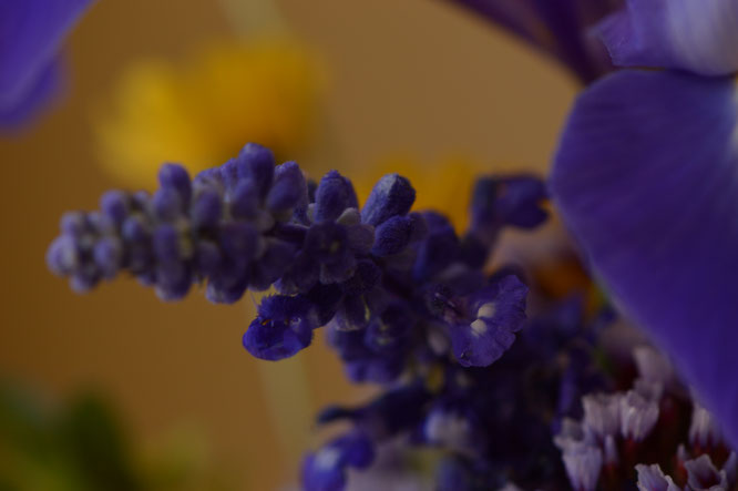small sunny garden, desert garden, amy myers, photography, garden photography, in a vase on monday, iavom, monday vase, salvia farinacea