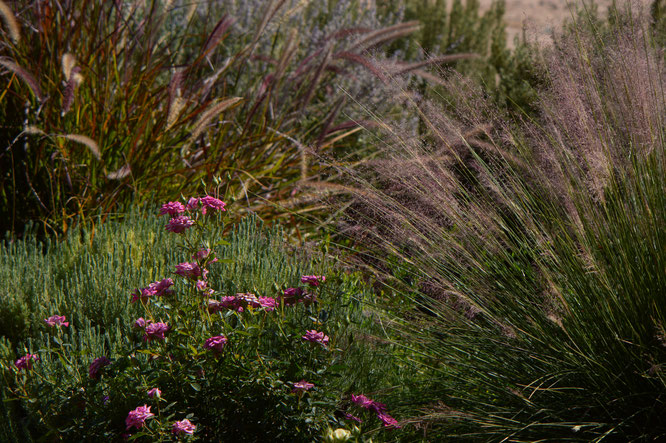 tuesday view, small sunny garden, desert garden, amy myers, photography,