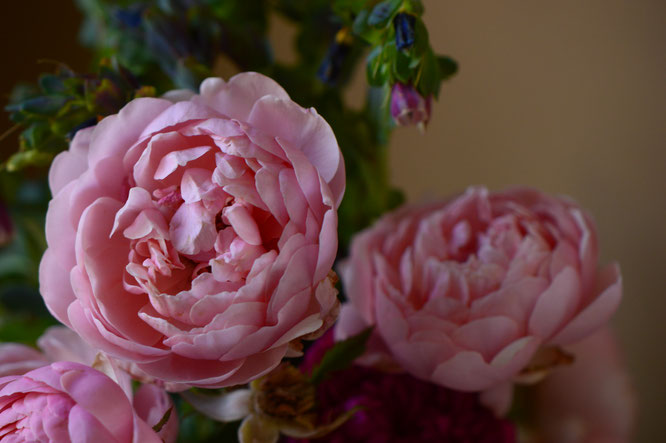 small sunny garden, desert garden, amy myers, photography, garden photography, in a vase on monday, iavom, monday vase, the alnwick rose, rose