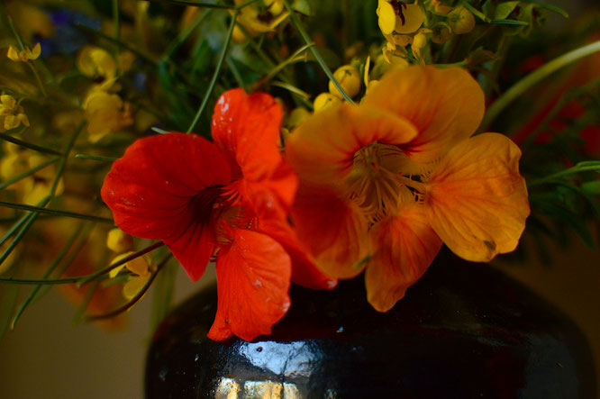 small sunny garden, desert garden, amy myers, photography, in a vase on monday, iavom, monday vase, nasturtium