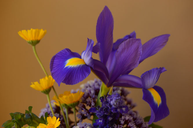 small sunny garden, desert garden, amy myers, photography, garden photography, in a vase on monday, iavom, monday vase, iris, dutch, blue magic,