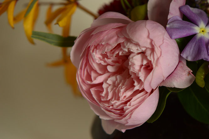 in a vase on monday, monday vase, desert garden, small sunny garden, amy myers, photographer, photography, the alnwick rose