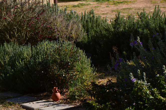 small sunny garden, desert garden, amy myers, photography, tuesday view