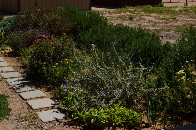 small sunny garden, desert garden, amy myers, photography, garden photography, sonoran desert, tuesday view