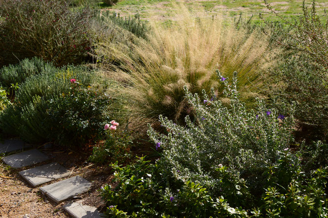 small sunny garden, desert garden, amy myers, photography, tuesday view, january
