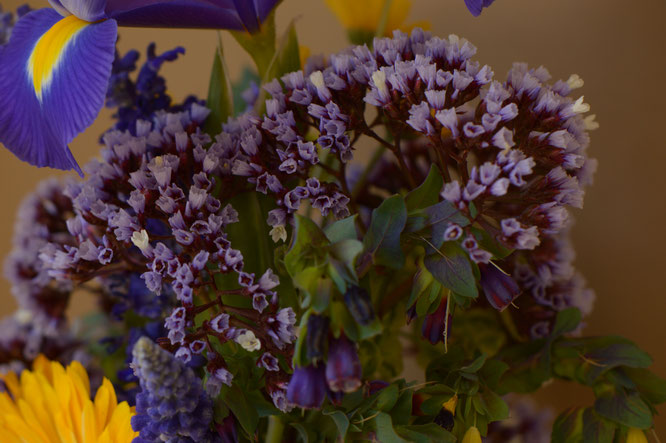 small sunny garden, desert garden, amy myers, photography, garden photography, in a vase on monday, iavom, monday vase, limonium perezii