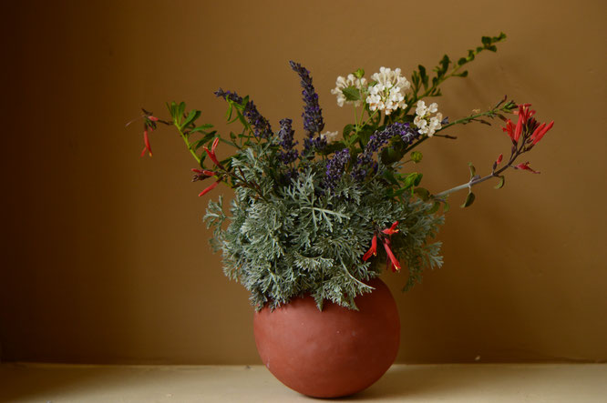 small sunny garden, desert garden, in a vase on monday, iavom, amy myers, photography, pottery, ceramics, earthenware, handbuilt, coiled, chuparosa, justicia californica, artemisia, powis castle, lavender, goodwins creek gray, lantana, eremophila, outback