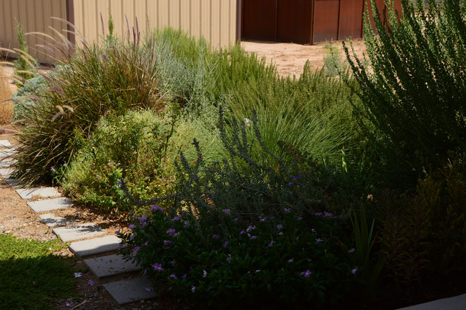 small sunny garden, desert garden, garden photography, photography, amy myers, tuesday view