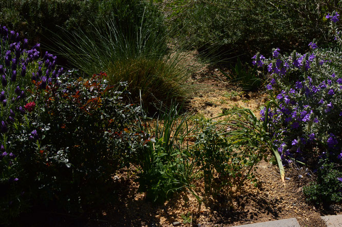 small sunny garden, desert garden, amy myers, photography, tuesday view, march, spring