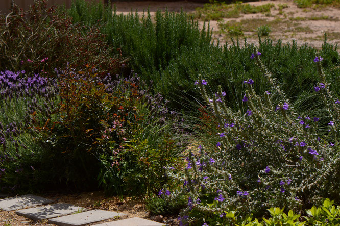 small sunny garden, desert garden, amy myers, photography, south border, tuesday view, words and herbs,
