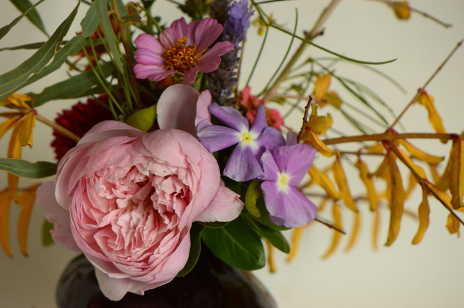 in a vase on monday, monday vase, desert garden, small sunny garden, amy myers, photographer, photography, rose, zinnia