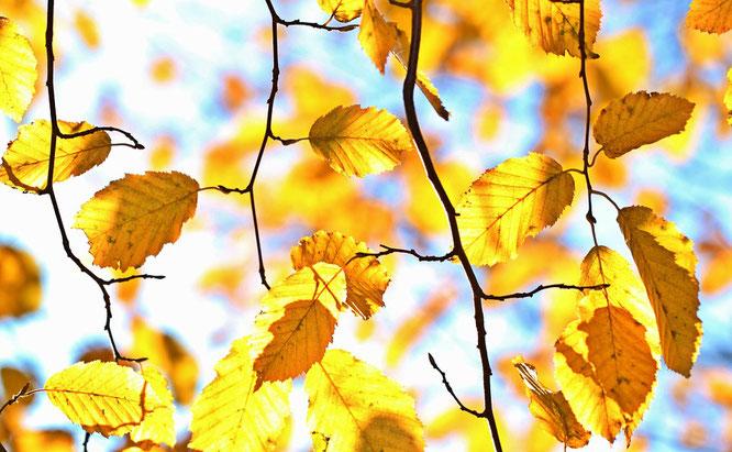 otoño sin resfriados