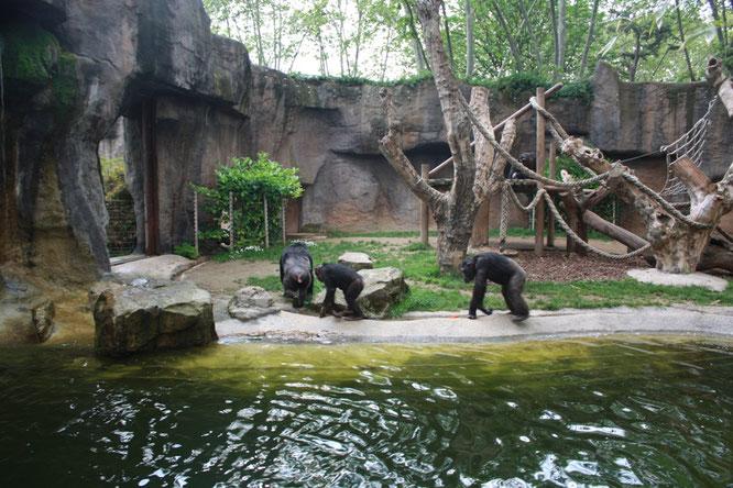 Зоопарк Барселоны. Новости Барселоны