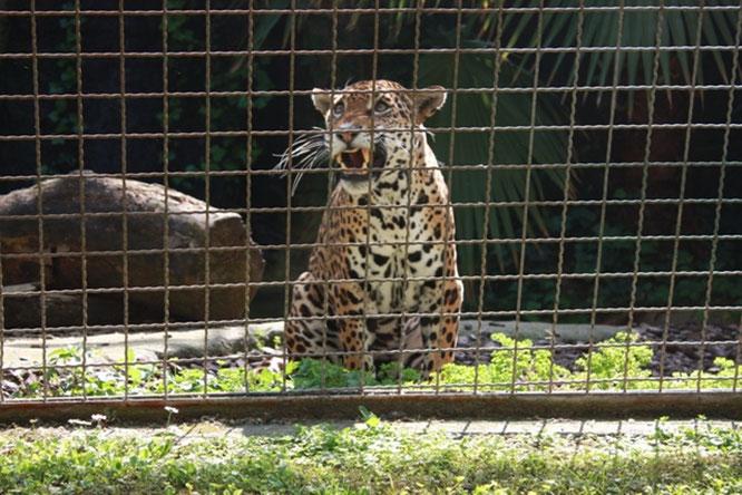 Зоопарк Барселоны. Экскурсии в Барселоне