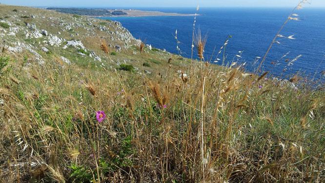 Copyright, AincaArt, Ainca Kira, Foto und Text, Writer, Photographer, Photography, Puglia, Salento, Orte