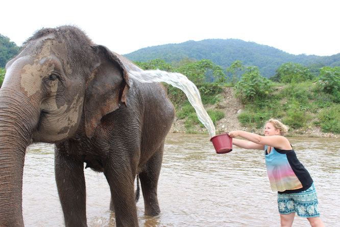 Bathing elephant in Chiang Mai