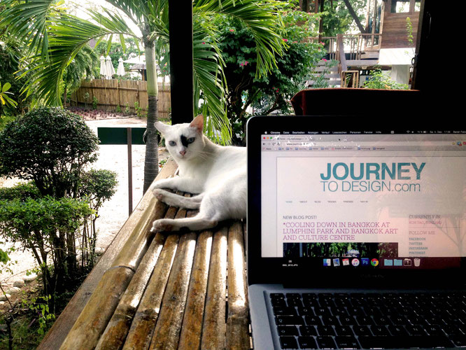Cat colleague on Koh Tao