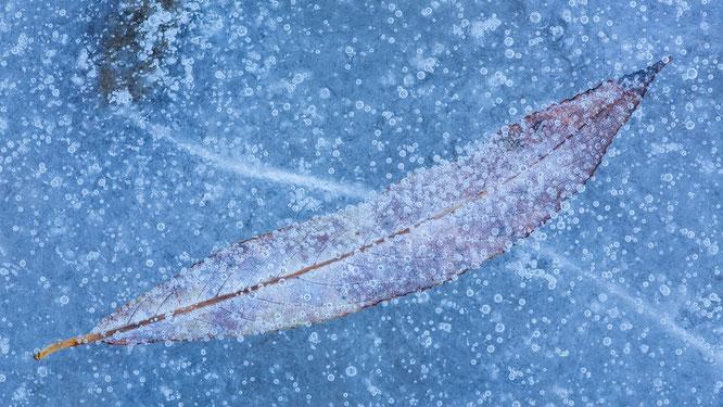 Eisstruktur, eis, frozen,blatt, sebastian vogel, vogel-naturfoto