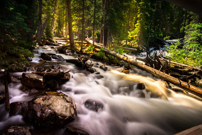 Entspannen beim Waldbaden