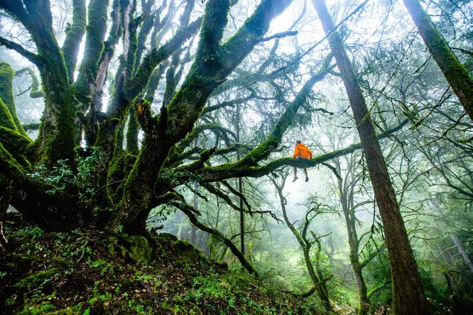 Waldbaden heißt in Japan Shinrin Yoku