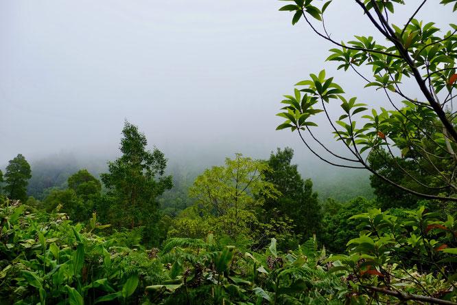 Über dem Urwald liegt der Nebel: Sao Miguel, Azoren