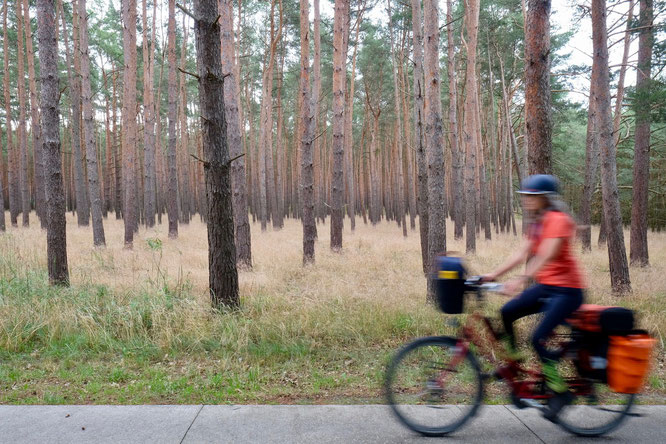 Radfahrerin im Wald