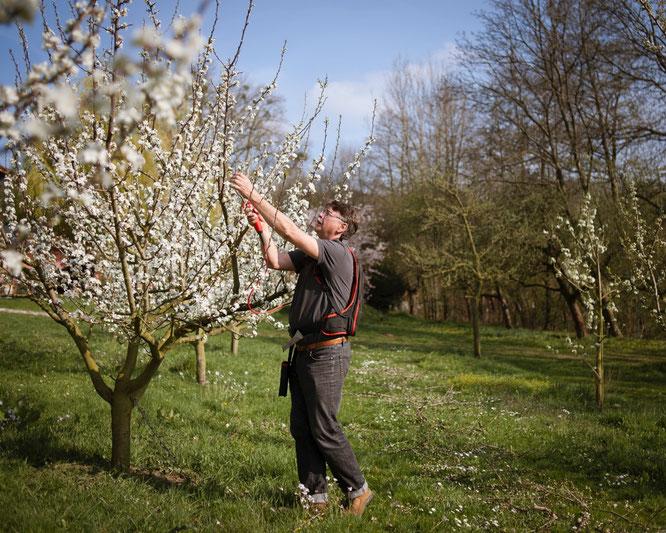 Roland Schmitt Obstblüte im Walberla