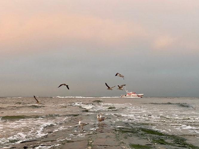 Norderney Nordsee Möwen Boot
