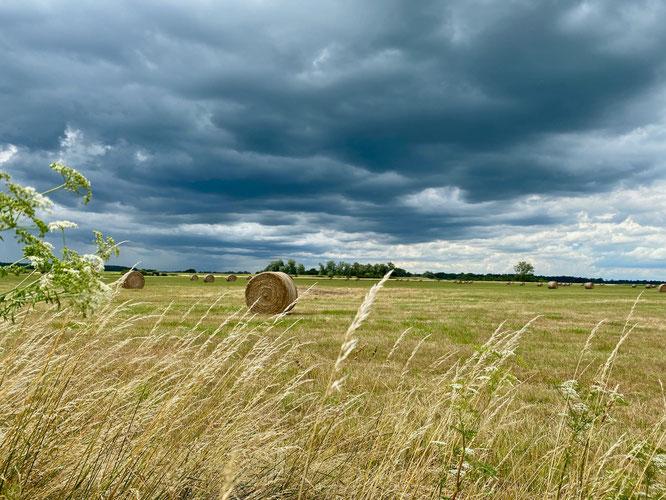 Feld am Elberadweg