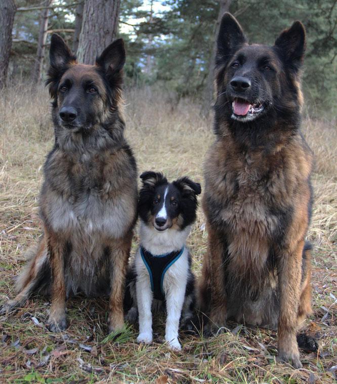 Tux und seine Bodyguards