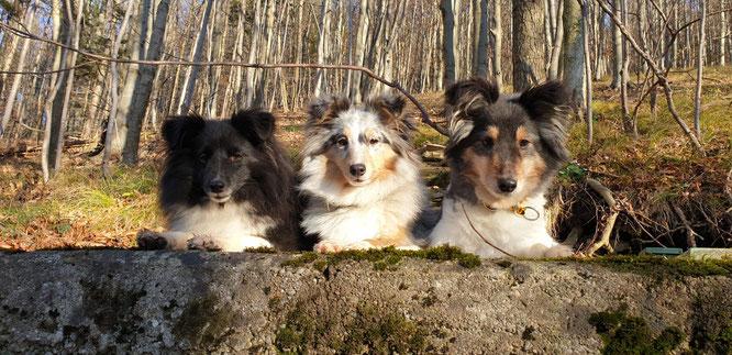 3 x Sprightliness : Kassiopeia, Quick Boogie und Agent Jack