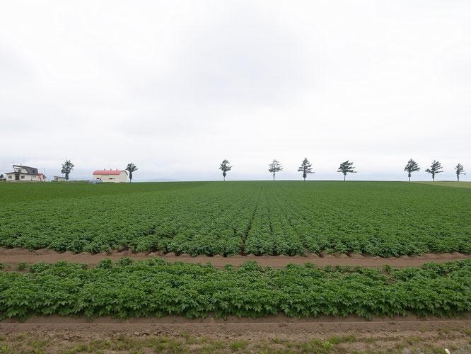 丘陵地に連なる畑が美しい風景を描く「メルヘンの丘」