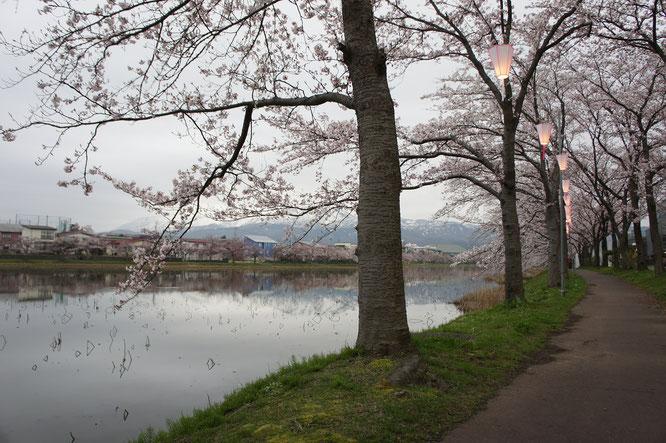 高田公園の外堀。小道ですれ違った多くの方が外国人。時代の変化を感じました