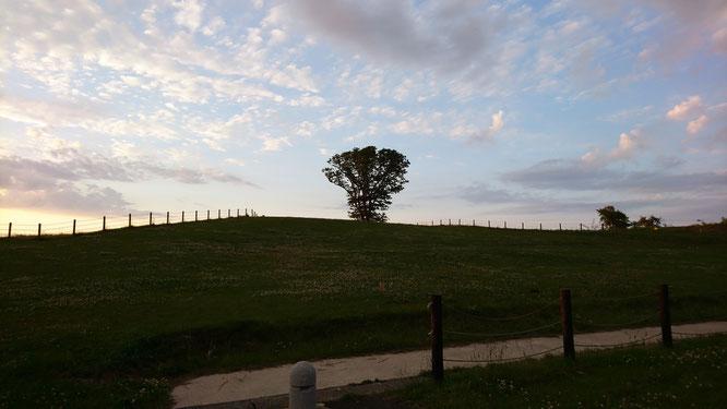夕刻のたにはま公園。その先にある景色にワクワクしてきました