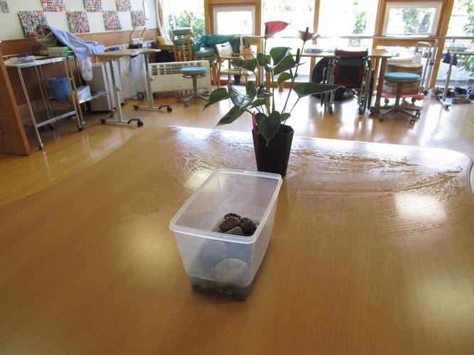 施設内のデイルーム。テーブルの上にある水槽