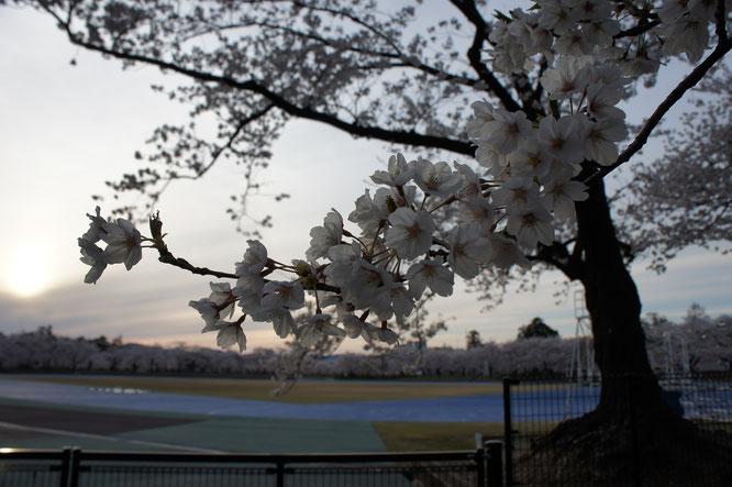 17:40 高田公園陸上競技場。昔は土色のトラックでしたが、今は青色。心が落ち着いて好記録が出やすいそうです